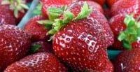 Yarra Strawberries